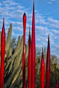 R = RED in the Desert The beginnings of the Chihuly display at the Desert Botanical Gardens with more still to come. The spires of red mixed with the Saguaro cactus was quite unique!