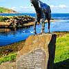 Johann the goat. Cushendun, County Antrim
