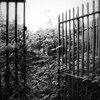 Railings and Gate<br /> Dungiven Priory,<br /> County Londonderry