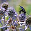 Thistle & Bug