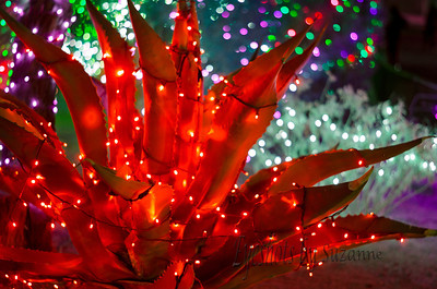 Cactus Garden Christmas lights at Ethel M in Las Vegas If you have never had their chocolates, they are wonderful!