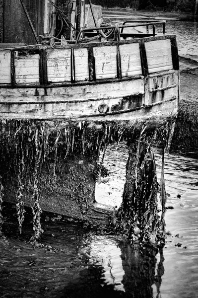Decaying fishing boat.<br /> Carrickfergus harbour.<br /> Pictured by Michelle
