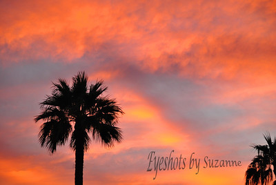 My final PINK CHALLENGE Tribute. Arizona is known for its beautiful pink sunsets, mainly caused by the air pollution.  This one actually taken from the upper balcony of my condo.  Maybe the one place where the sun was shining.