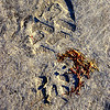 Footstep in the Sand<br /> Ballywalter Beach, County Down<br /> Pictured by Michelle<br /> Sunday Alphabet Challenge, Letter 'F'<br /> Post Date: 18th August 2013