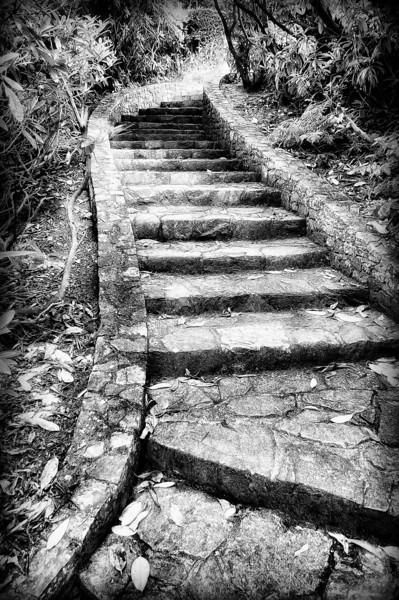 Stone stairway. Donard Park, Newcastle, County Down
