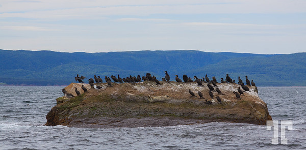 seals-Bird-island-cape-breton-ns-8