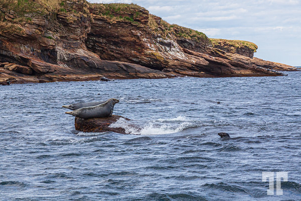 seals-Bird-island-cape-breton-ns-4