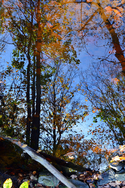 Fall Reflection - Upside down or right side up?<br /> <br /> Daily Photos  -  November 25, 2011<br /> <br /> Upside Down! I purposely rotated the orientation of this shot 180 degrees and posted it upside down... Note the rocks at the bottom (top) of the image creating the shoreline and the log disappearing into the water!