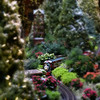 All Aboard! <br /> <br /> Daily Photos  -  November 28, 2011<br /> <br /> The Wonderland Express at the Chicago Botanic Gardens