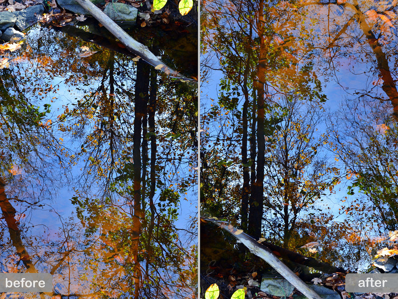 "*2 posts today...<br /> <br /> This is actually a follow up to the post I made earlier today ""Fall Reflection - Upside down or right side up?"" <br /> After the fact, I thought that presenting the image this way, showing the reflection as seen in the original picture (left) vs. the image that was rotated 180 degrees and posted, was more effective...<br /> <br /> Daily Photos - November 25, 2011<br /> <br /> Hope everybody had an enjoyable Thanksgiving!"