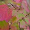 Fall Underbrush - SOOC<br /> <br /> Daily Photos  -  October 17, 2011