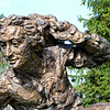 Carolus Linnaeus Bronze Sculpture<br /> <br /> Daily Photos  -  May 24, 2011