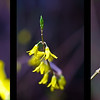 20100313-triptych-2