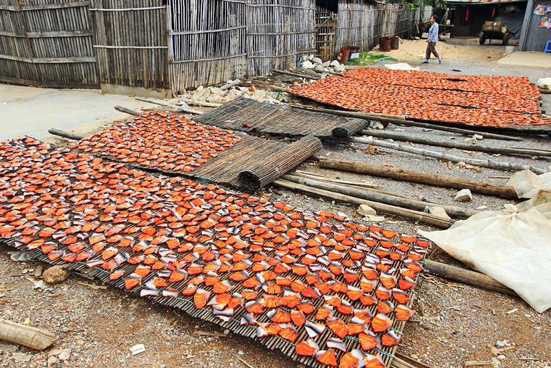Drying catfish fillets in Battambang, Cambodia