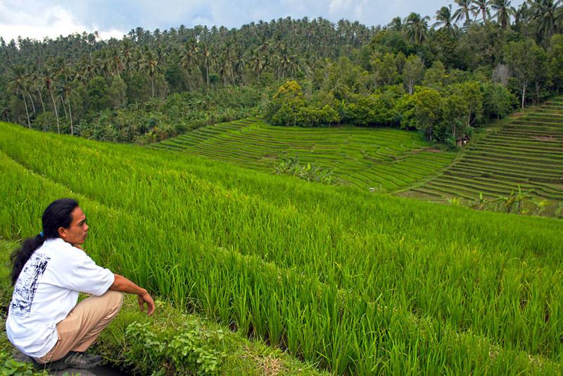 Gorgeous rice terraces in Bali invite contemplation