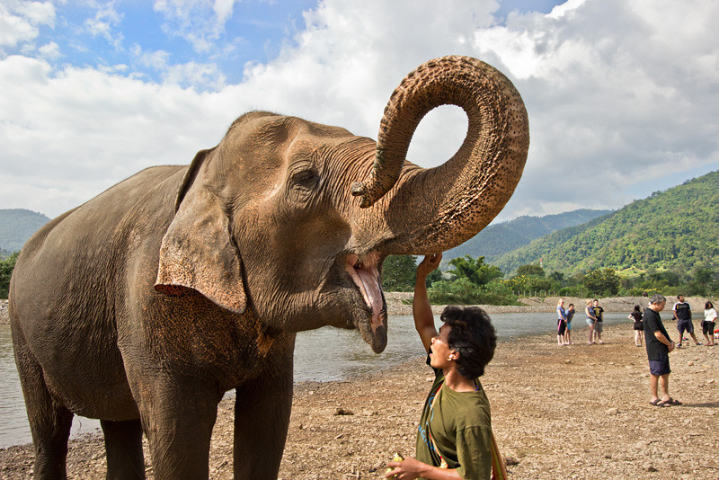 Mahout with his Elephant after bathing in the river at Elephant Nature Park in northern Thailand