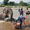 Guests at Elephant Nature Park in northern Thailand help bathe elephants in the river