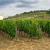 Vineyards cover the hillsides in the Tokaj Region of northern Hungary