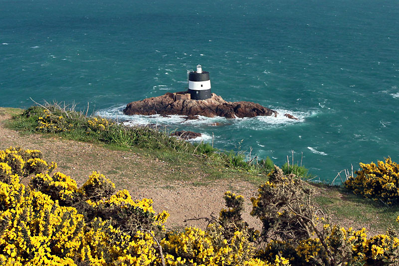 Flowering Gorse frames Noirmont Tower on Jersey in the British Channel Islands