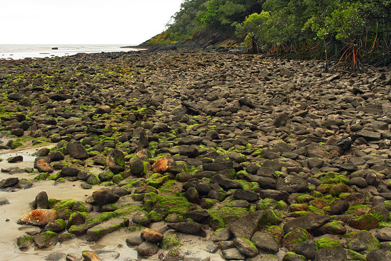 Mossy Rocks Litter the Beach at Australia's Cape Tribulation