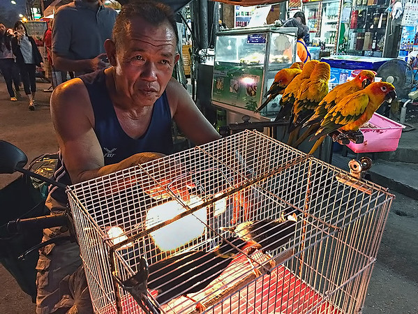 The Chiang Mai Parrot Man is something of an institution. For years, he has been riding around the northern Thailand city with his pet parrots and mynah birds on the front of his motorbike.He is most often spotted during the evening at Chiang Mai Gate Market