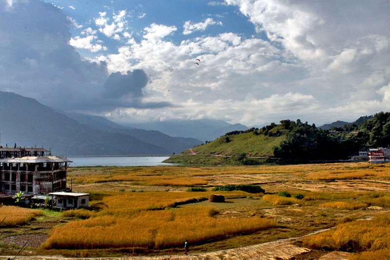 Golden rice fields at end of Phewa Lake in Pokhara, Nepal
