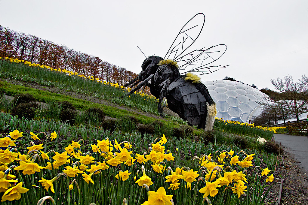 Giant bee sculpture perches on a hill aside the biomes at Eden Project in Cornwall, England
