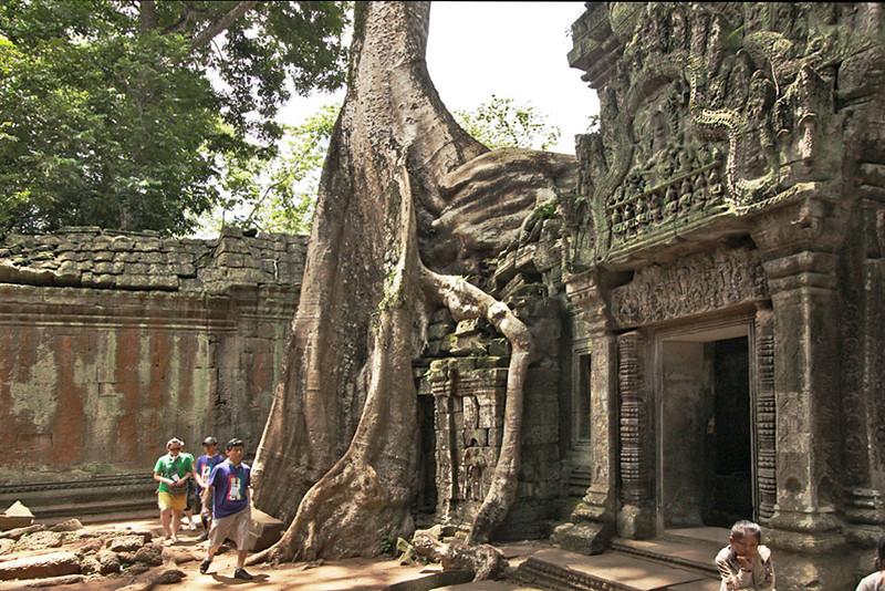 Giant fig trees have overgrown the ruins of Ta Prohm at Angkor Wat, Cambodia