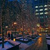 Miniature white lights dress up barren winter trees in a plaza in downtown Chicago