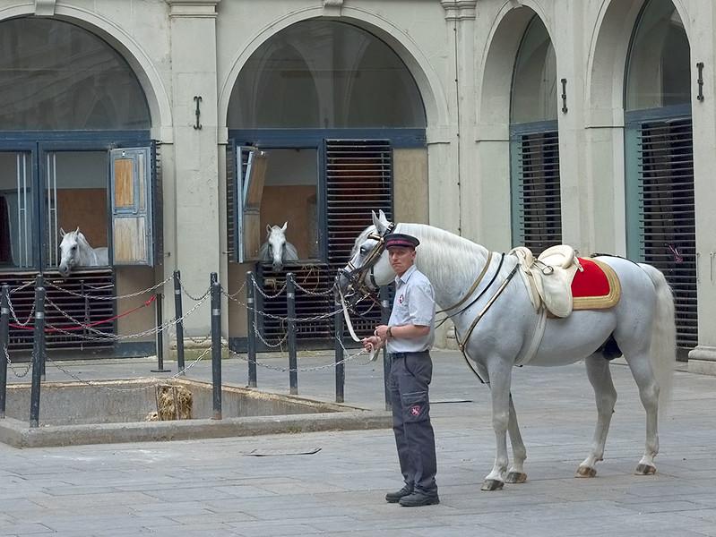 Lipizzaner Horses in Vienna, Austria at the Spanish Riding School