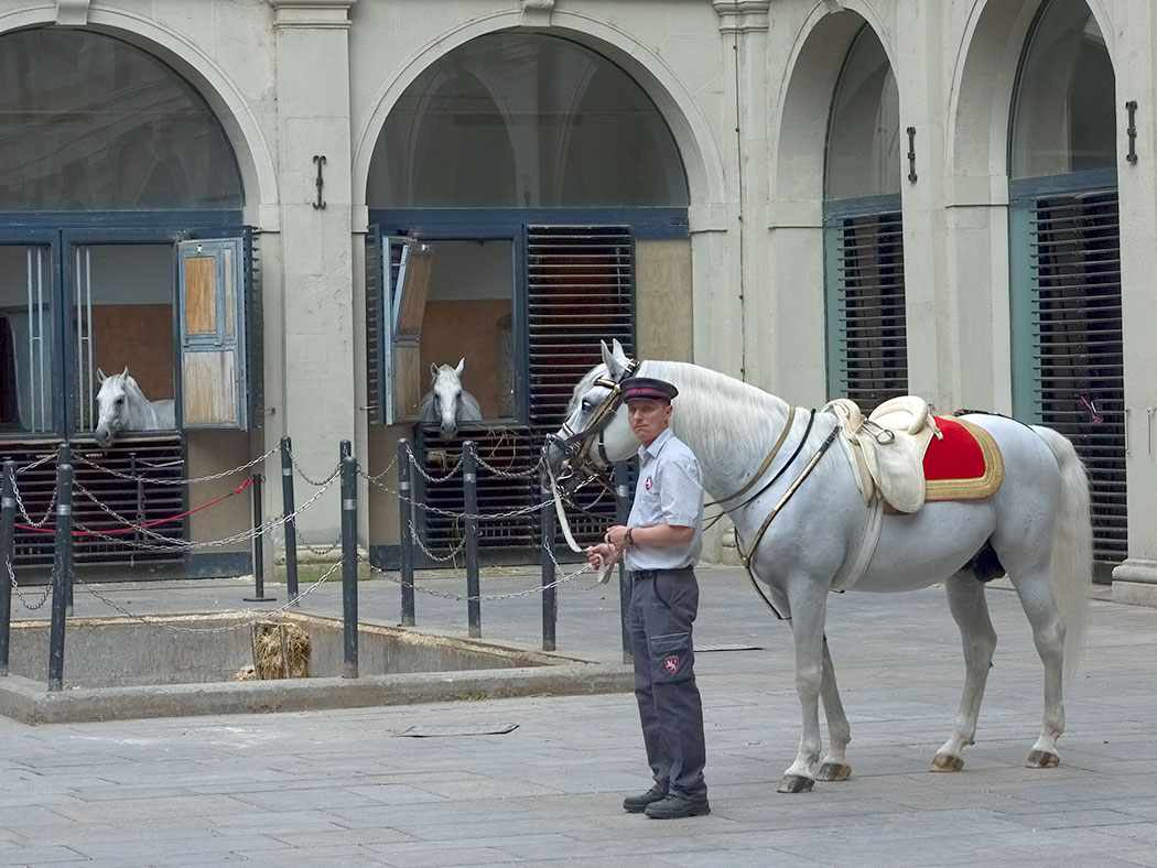 Lipizzaner Horses in Vienna, Austria at the Spanish Riding School