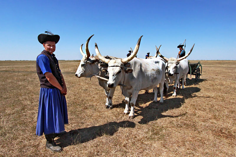 Hungarian grey cattle and traditional herdsmen at Hortobagy National Park in eastern Hungary