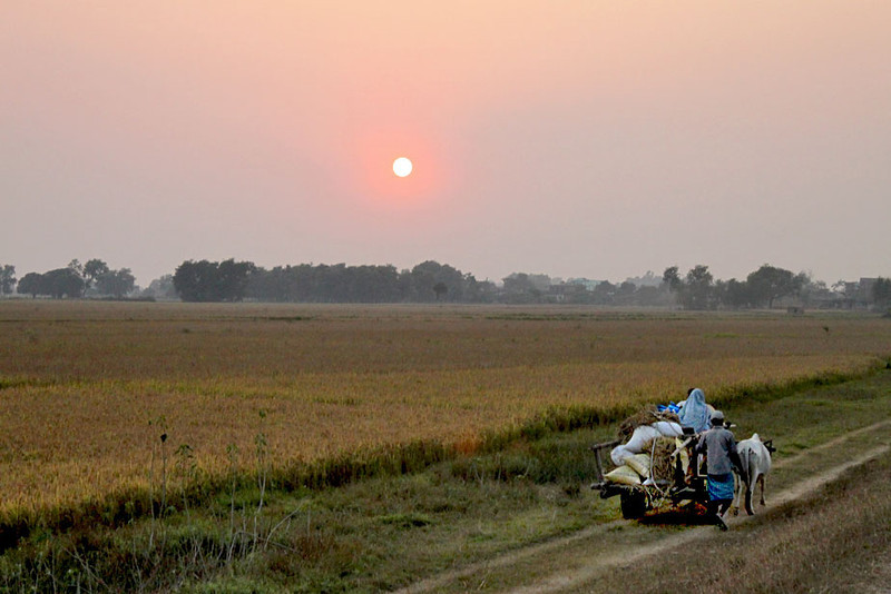 Sunset over fields in Lumbini, in the southern Terai section of Nepal