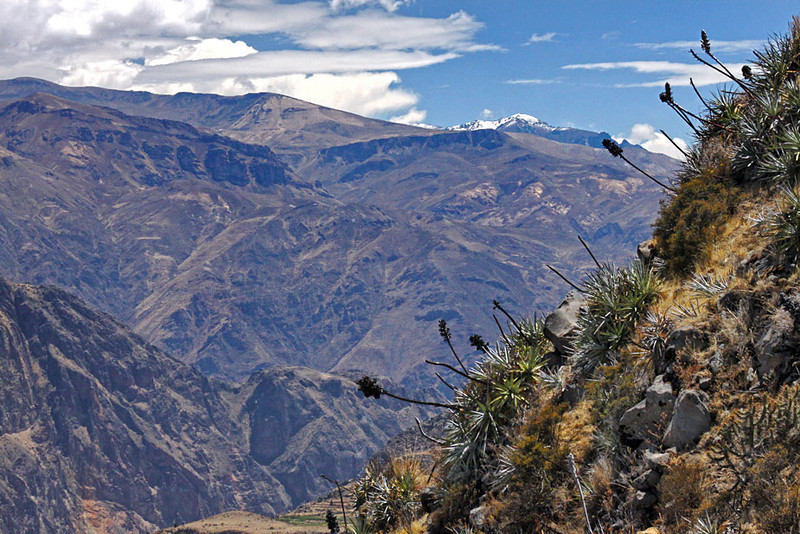 Rugged mountains make up most of Colca Canyon, near Arequipa, Peru
