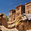Camel waits for a rider at Kasbah Ait Ben Moro in Morocco