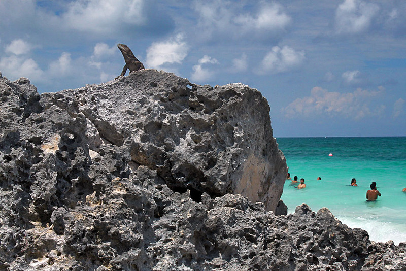 Gutsy Lizard surveys his surroundings at Tulum Beach on the east coast of Mexico's Yucatan peninsula