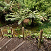 "The semi-tropical ""Jungle"" valley at The Lost Gardens of Heligan in Cornwall, England"