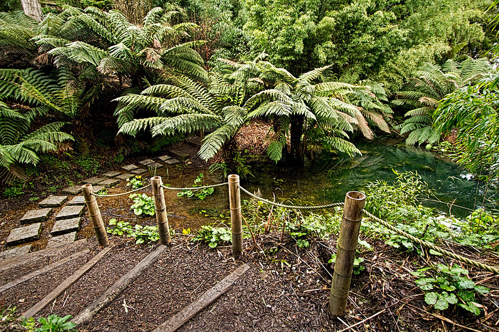 """The semi-tropical """"Jungle"""" valley at The Lost Gardens of Heligan in Cornwall, England"""