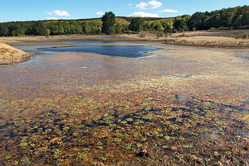 Rainbow algae blooms in a lake near the town of Yasna Polyana, Bulgaria