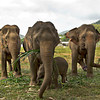 "Elephant with broken back raises her baby with help from two ""nannies"" at Elephant Nature Park in northern Thailand"