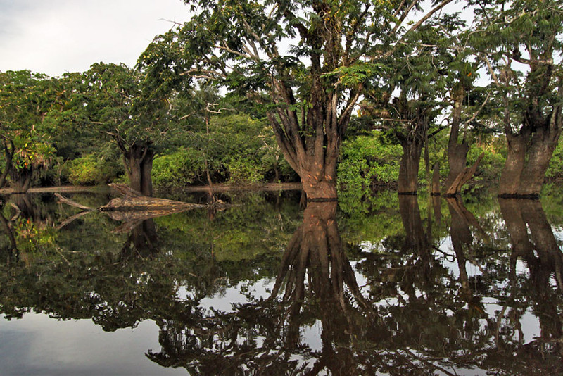 Cuyabeno National Park in the Amazon is an inundated rainforest