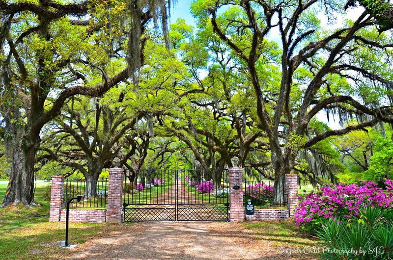 """ROSEDOWN PLANTATION"" (aka ""Oak Alleys"")"