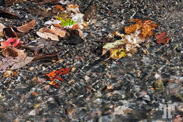 Water and leaves with autumn colors.
