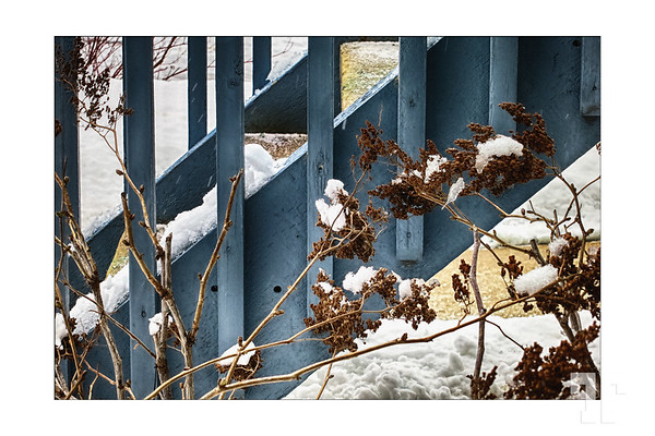Winter weeds