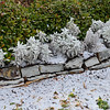 """FINALLY................SNOW!"""