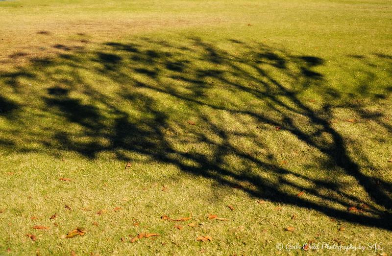 """""""TREE SHADOWS"""""""