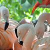 Flamingos<br /> <br /> Daily Photos  -  July 10, 2012