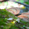 There's a fungus among us<br /> <br /> Daily Photos  -  October 7, 2011