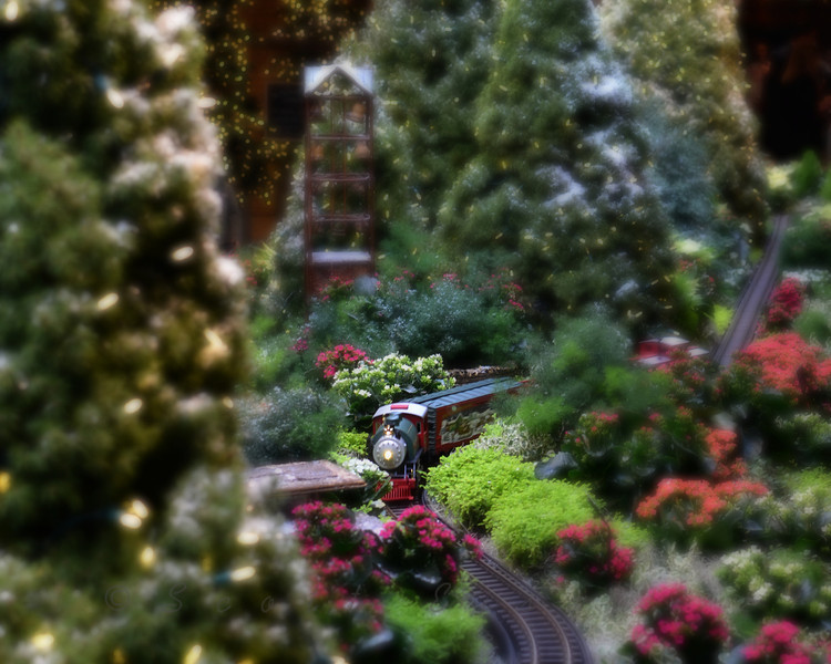 All Aboard! Daily Photos  -  November 28, 2011The Wonderland Express at the Chicago Botanic Gardens