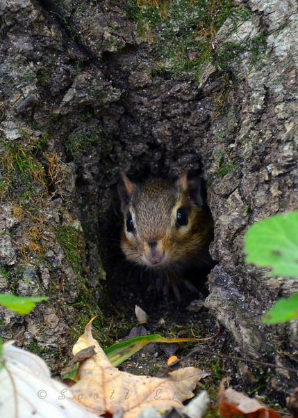 Peek-a-boo!<br /> <br /> Daily Photos  -  October 5, 2011